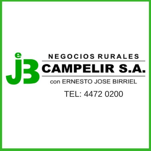 publicidad campelir