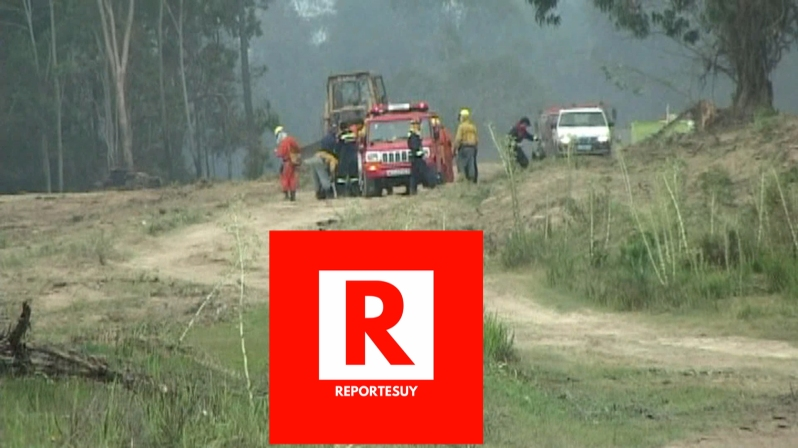 incendio forestal 6.jpg