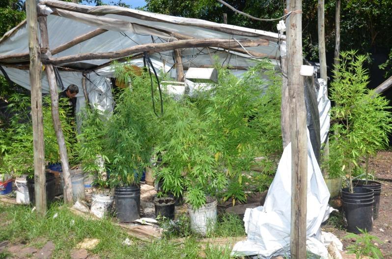 incautan plantas.jpeg